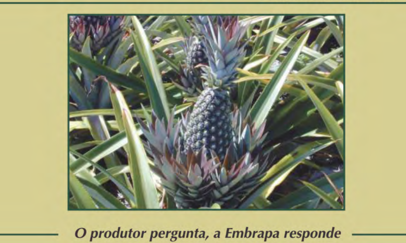 500 Perguntas e Respostas sobre o Cultivo do Abacaxi