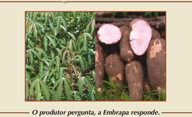 500 Perguntas e Respostas sobre o cultivo da Mandioca